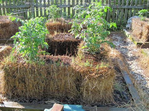 using straw in vegetable garden quot straw bale lasagna gardening sheet mulching layering