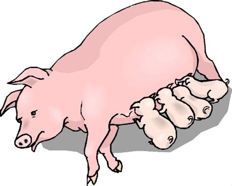 clipart pig baby piglet clipart clipart panda free clipart images