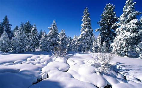 Snow Scenes Wallpaper   WallpaperSafari