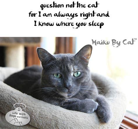 cat haiku sweet verses books cats in literature catster