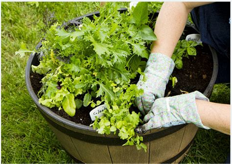garden socks container gardening container gardening potatoes and carrots rocky
