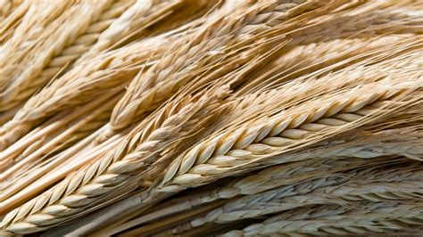 whole grains types what are some types of whole grain foods reference