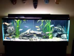 freshwater fish tank decoration ideas home decore