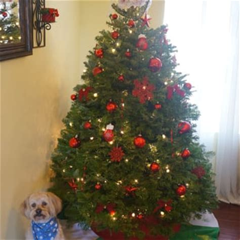pinery christmas trees 19 reviews christmas trees
