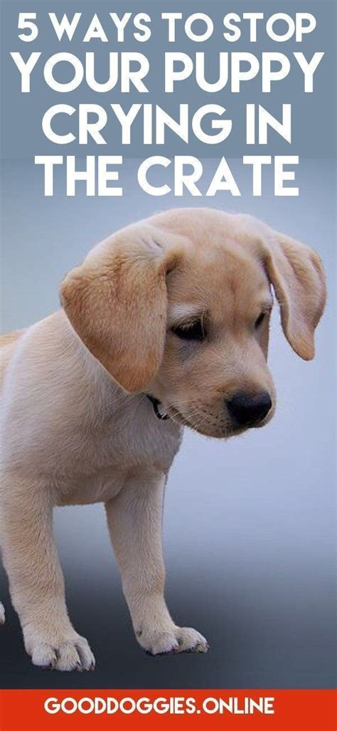puppy cries all in crate best 25 puppy schedule ideas on goldendoodle puppy care and