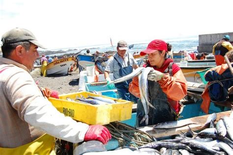 marianela classic reprint industrial fisheries crowd out artisanal fisherpersons in south america inter press service