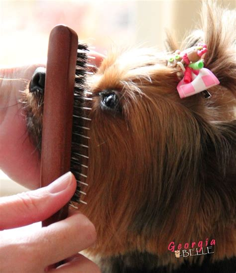 best brush for a yorkie 1000 images about yorkie on carrier pets and puppys