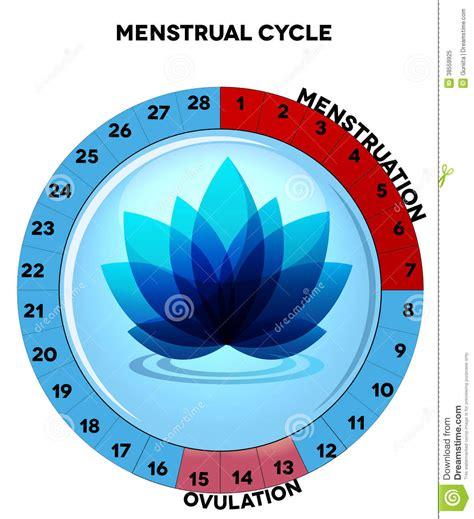 Calendar Method Calculator For Irregular Blue Menstrual Cycle Chart With Flower Royalty Free Stock