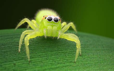 Amazing Pictures Of Garden Spiders #2: Spidy_5407spx_02.jpg