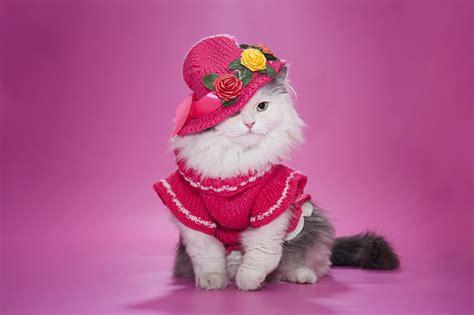 cute cat image  pink dress  hat