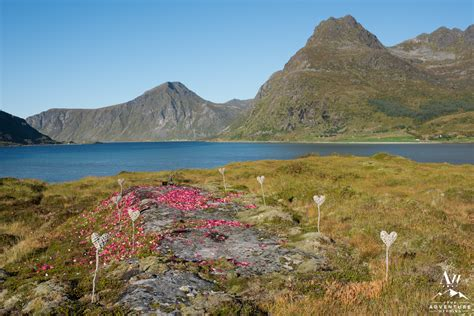 Wedding Planner Island by Meeting In Iceland To A Lofoten Islands Elopement