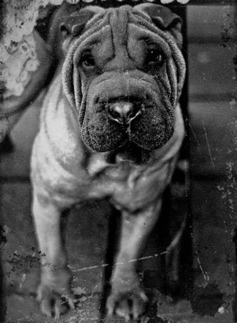Black and White Pictures of Animals   Animals Zone