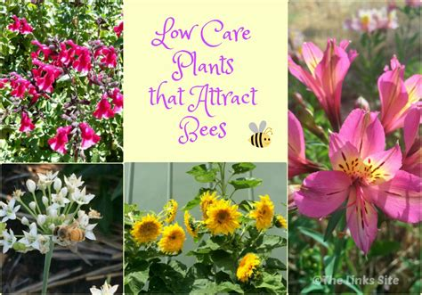 Bee Garden Flowers Low Care Plants That Attract Bees The Links Site