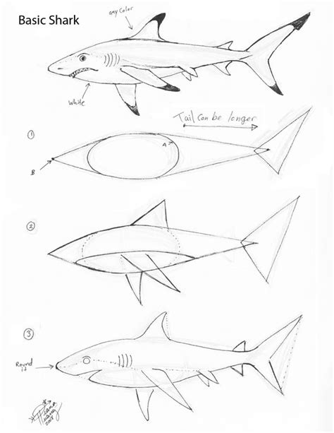 basic pencils for sketching draw a basic shark by diana huang on deviantart