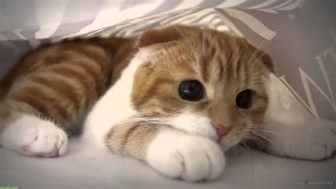 cat under wallpaper funny scared cat hidding behind bed sheet wallpaper