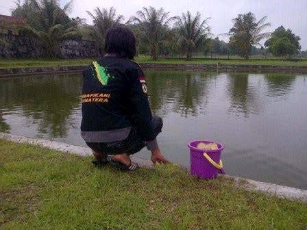 Bibit Ikan Nila Aceh pembudidaya ikan air tawar butuh bantuan bibit cara