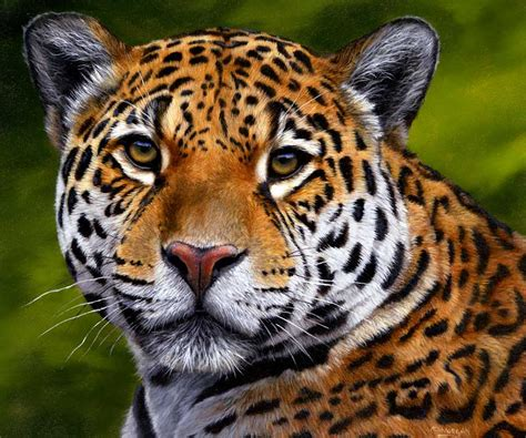 Endangered Jaguar Endangered Jaguars Help Stop The Persecution