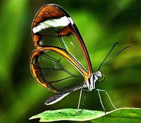 imagenes de mariposas unicas lista las 12 mariposas m 225 s fascinantes del mundo