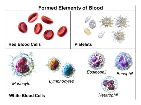 2 proteins found in blood plasma what does blood plasma play in the blood