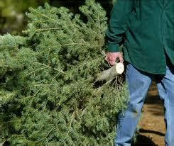 cut your own christmas tree columbus utilities