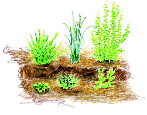 Culture Des Plantes by Les Plantes Aromatiques 1 Installer Et Cultiver