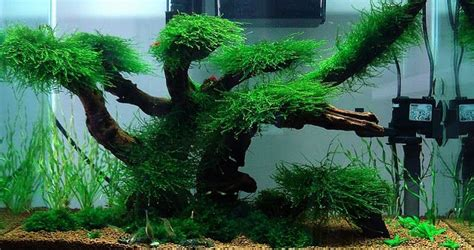 aquascape maintenance aquascaping ideas low maintenance moss tree layout cube