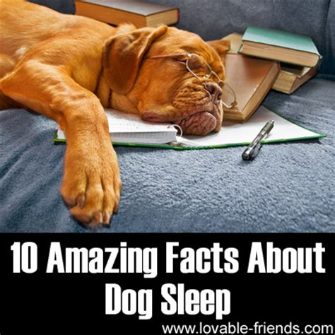 10 Facts About Dogs by 10 Amazing Facts About Sleep