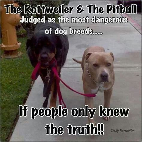 rottweiler or pitbull discover and save creative ideas