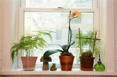 Window Sill Plants Decor 6 Ways To Decorate Dress Your Window Sills