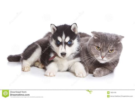 free husky puppies free siberian husky puppies 55 hd wallpaper dogbreedswallpapers