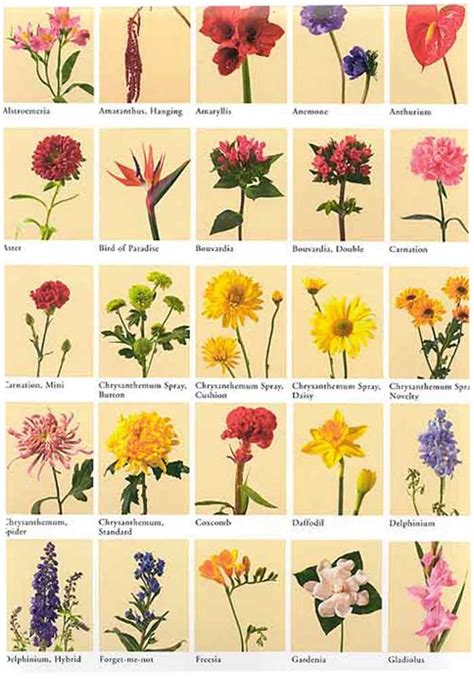 names of flowers types of flowers with pictures and kinds of flowers list pictures reference