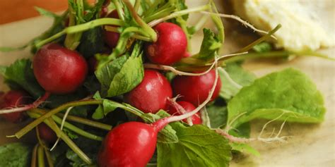 radish salad recipe radish salad with fennel and oranges oregonian recipes