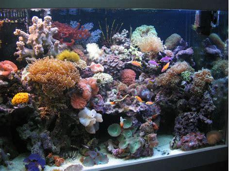 vancouver aquarium 50 new year new years aquarium 28 images vancouver aquarium new