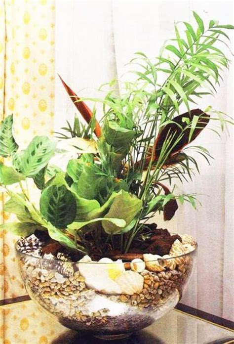 indoor plant decoration maranta plant for interior decorating with green