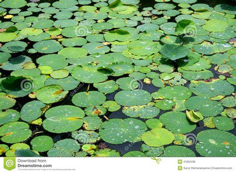 lotus leafs lotus leafs royalty free stock photo cartoondealer