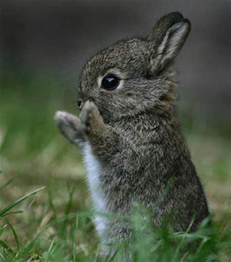 Gantungan Bunny Kopenhagen Bunny 1 bunny 1funny