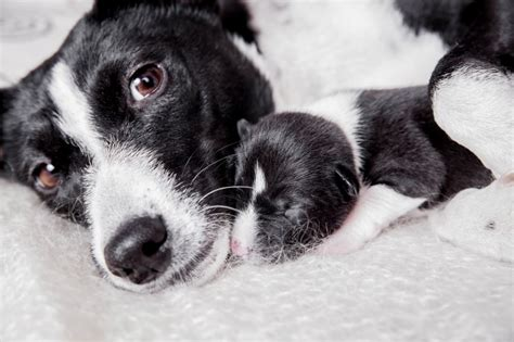 are all puppies born with worms can puppies be born with worms pets4homes