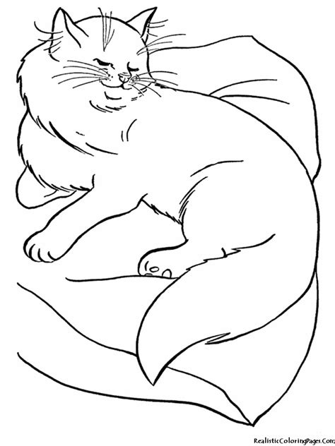coloring pages of realistic cats realistic coloring pages of cats realistic coloring pages