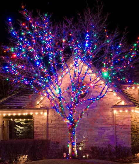 royal oak tree lighting light up greater vancouver with our lights
