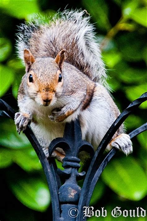 woman on geico commercial with squirrels in attic 47 best images about squirrels chipmunks on pinterest