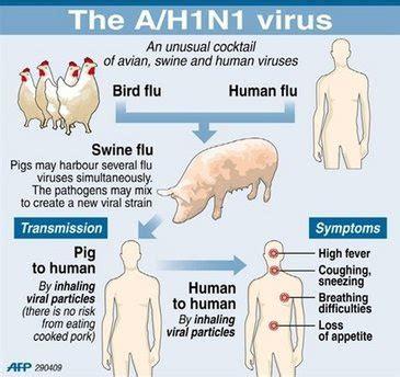 cdc h1n1 flu images of the h1n1 influenza virus h1n1