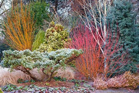border   winter garden bressingham gardens norfolk