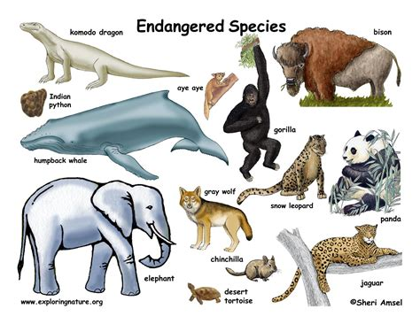 species name which animals are endangered