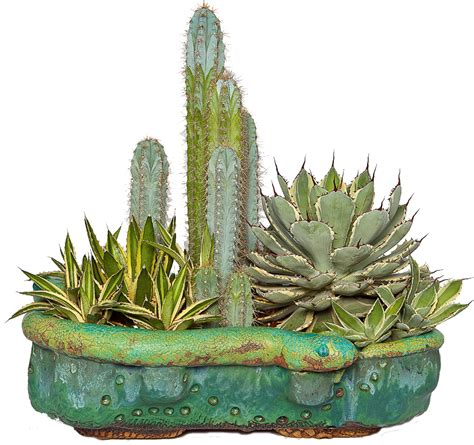cactus planter truly unruhly concrete pots succulents and other crafts
