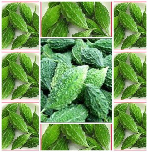 Bitter Melon Gourd Thai 10 Seeds Asian Vegetable Seeds Vegetable Garden Seed