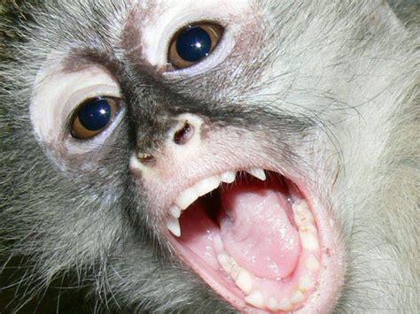 tetanus for bite tetanus archives monkey helpline