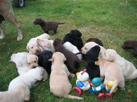 puppy galore puppy galore kennel dogs our friends photo