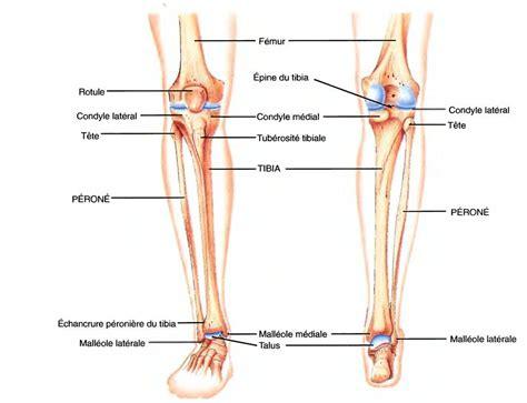 malleolo tibiale interno osteologie