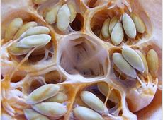 Trypophobia Is A Real, Terrifying Thing, And You ... Lotus Pod Skin Disease