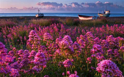 nature flowers pink purple plants fields landscapes boats